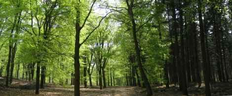 lichtisleven bomen