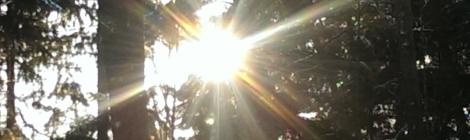 lichtisleven zonnestralen mastbos 12-2014
