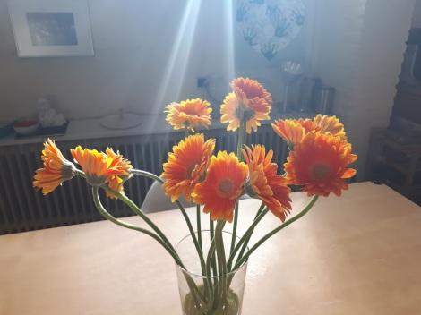 lichtisleven 11-20181 oranje1
